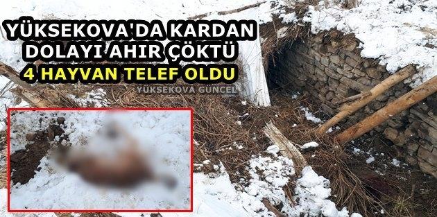Yüksekova'da Kardan dolayı ahır çöktü, 4 hayvan telef oldu