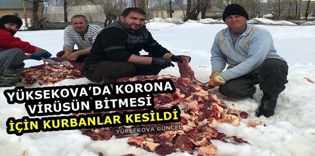Yüksekova'da Korona Virüsüne Karşı Kurban Kesilip Dua Edildi