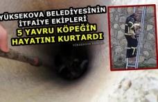 Yüksekova Belediyesinin İtfaiye Ekipleri 5 Yavru Köpeğin Hayatını kurtardı
