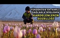 Yüksekova'da Karlı Dağlarla Birleşen Kardelenlerin Güzelliği