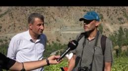 Yüksekova'daki yerli üzümler milli koleksiyon için kayıt altına alınıyor