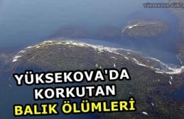 Yüksekova'da Korkutan Balık Ölümleri