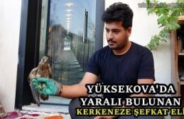 Yüksekova'da Yaralı bulunan kerkeneze şefkat eli
