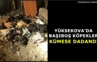 Yüksekova'da Başıboş Köpekler Kümese Dadandı