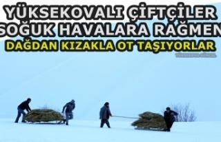 Yüksekovalı Çiftçiler Soğuk Havaya Rağmen Dağdan...