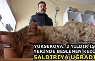 Yüksekova: 2 Yıldır İş Yerinde Beslenen Kedi...