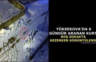 Yüksekova'da 6 gündür aranan kurt, boş sokakta...