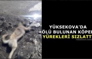 Yüksekova'da ölü bulunan köpek yürekleri...