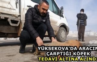 Yüksekova'da aracın çarptığı köpek tedavi...
