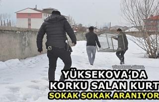 Yüksekova'da Korku Salan Kurt Sokak Sokak Aranıyor