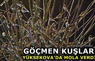 Göçmen Kuşlar Yüksekova'da Mola Verdi