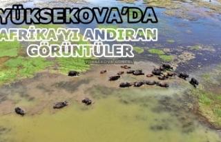 Yüksekova'da Afrika'yı Andıran Görüntüler