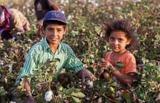 'Çocuk işçi'lerin sayısı 20 yıldır...