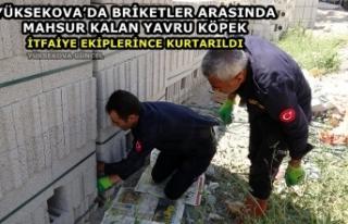 Yüksekova'da Briketler Arasında Mahsur Kalan Yavru...