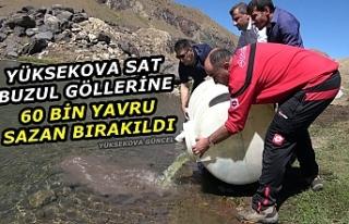 Yüksekova Sat Buzul Göllerine 60 Bin Yavru Sazan...