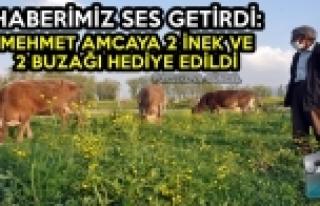 Haberimiz Ses Getirdi: Mehmet Amcaya 2 İnek Ve 2...
