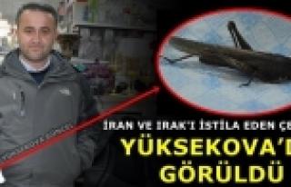 İran Ve Irak'ı İstila Eden Çekirge Yüksekova'da...