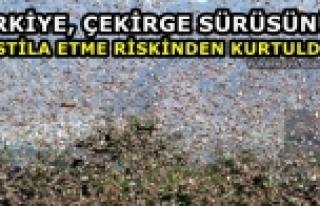Türkiye, çekirge sürüsünün istila etme riskinden...