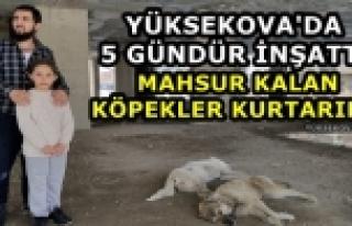 Yüksekova'da 5 Gündür İnşatta Mahsur Kalan Köpekler...