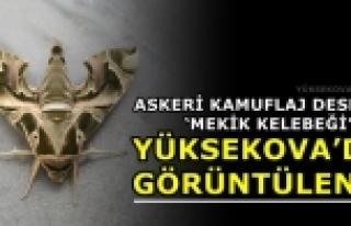 Yüksekova'da Askeri Kamuflaj Desenli 'Mekik Kelebeği'...