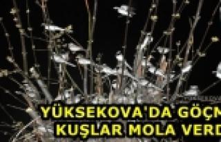 Yüksekova'da Göçmen Kuşlar Mola Verdi