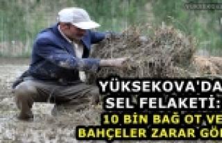 Yüksekova'da Sel Felaketi: 10 Bin Bağ Ot Ve Bahçeler...