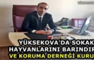 Yüksekova'da Sokak Hayvanlarını Barındırma...