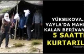 Yüksekova'da Yaylada Mahsur Kalan Berivanlar 5 Saatte...