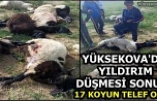 Yüksekova'da Yıldırım Düşmesi Sonucu 17 Koyun...