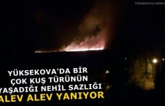 Yüksekova'da Bir Çok Kuş Türünün Yaşadığı Nehil Sazlığı Alev Alev Yanıyor