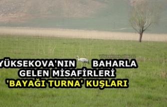 Yüksekova ilçesinde 'Bayağı Turna' kuşu görüntülendi