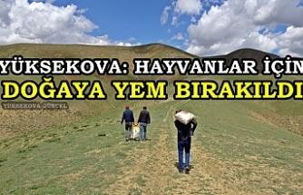 Yüksekova: Hayvanlar İçin Doğaya Yem Bırakıldı