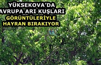 Yüksekova'da Avrupa Arı Kuşları Görüntüleriyle Hayran Bırakıyor