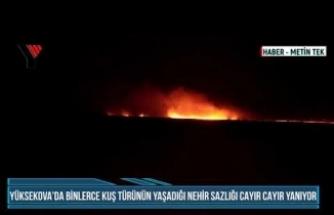 Yüksekova'da Binlerce Kuş Türünün Yaşadığı Nehir Sazlığı Cayır Cayır Yanıyor