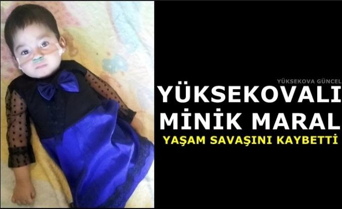 Yüksekovalı Minik Maral Yaşam Savaşını Kaybetti