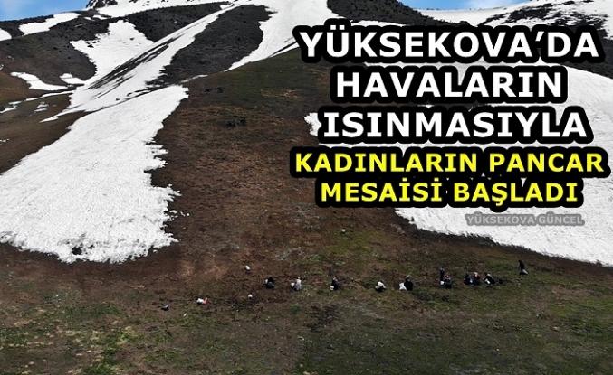 Yüksekova'da Havaların Isınmasıyla Kadınların Pancar Mesaisi Başladı