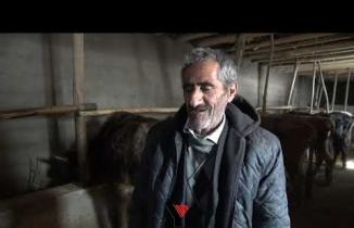 Bataklığa saplanan ineğin sahibi mehmet emin amca bu kış mutlu - Yüksekova