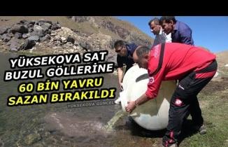 Yüksekova Sat Buzul Göllerine 60 Bin Adet Sazan Balığı Bırakıldı